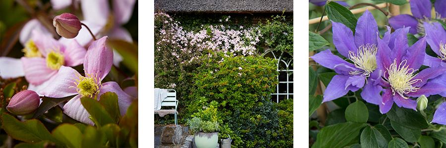 Balkon- en Terrasplant van het Jaar 2017