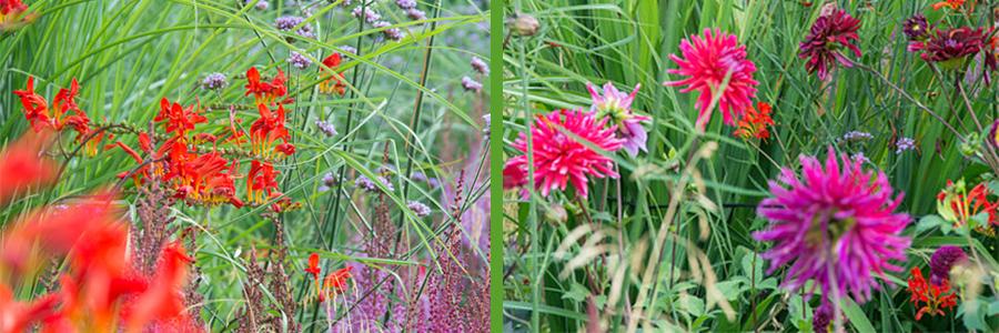 Zomerbollen en vaste planten, de perfecte match
